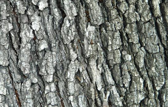 Free Bark Texture