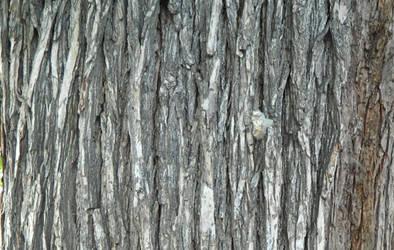 Free High Quality Bark Texture