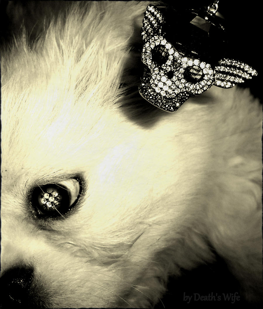 Dog and Skull by deathswife666