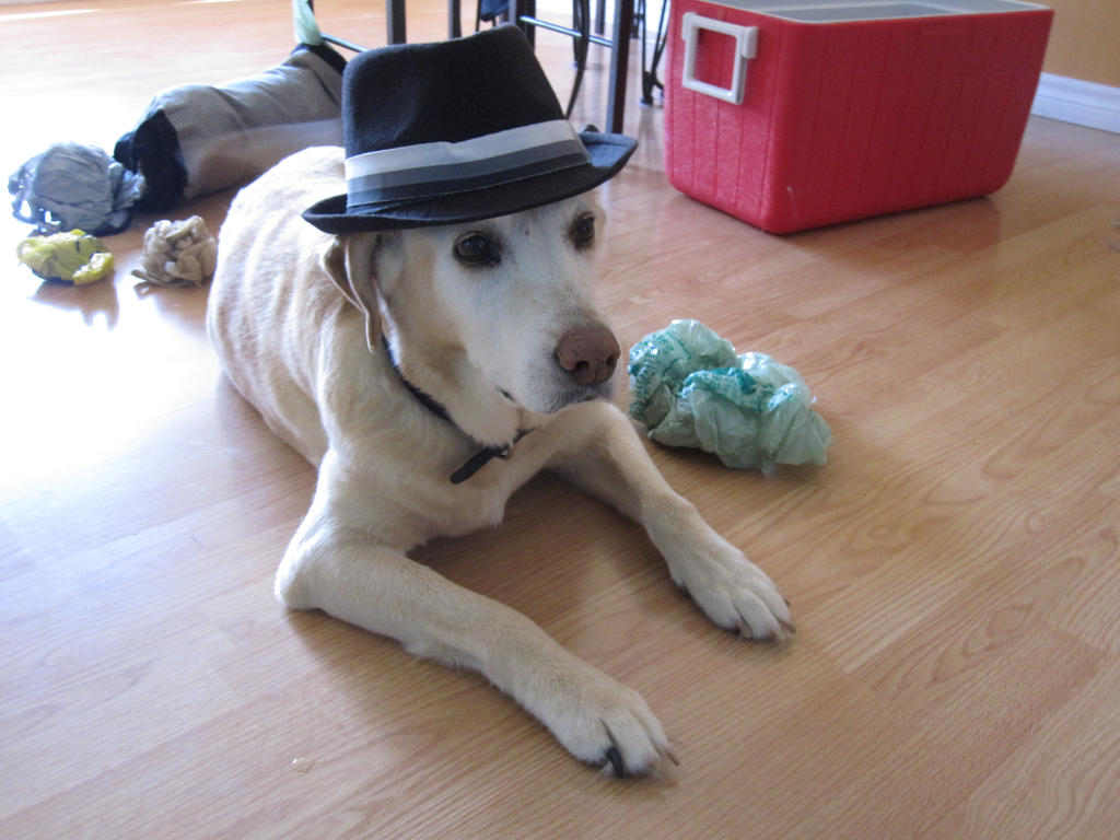 dog_in_a_hat_by_gloomy_city.jpg