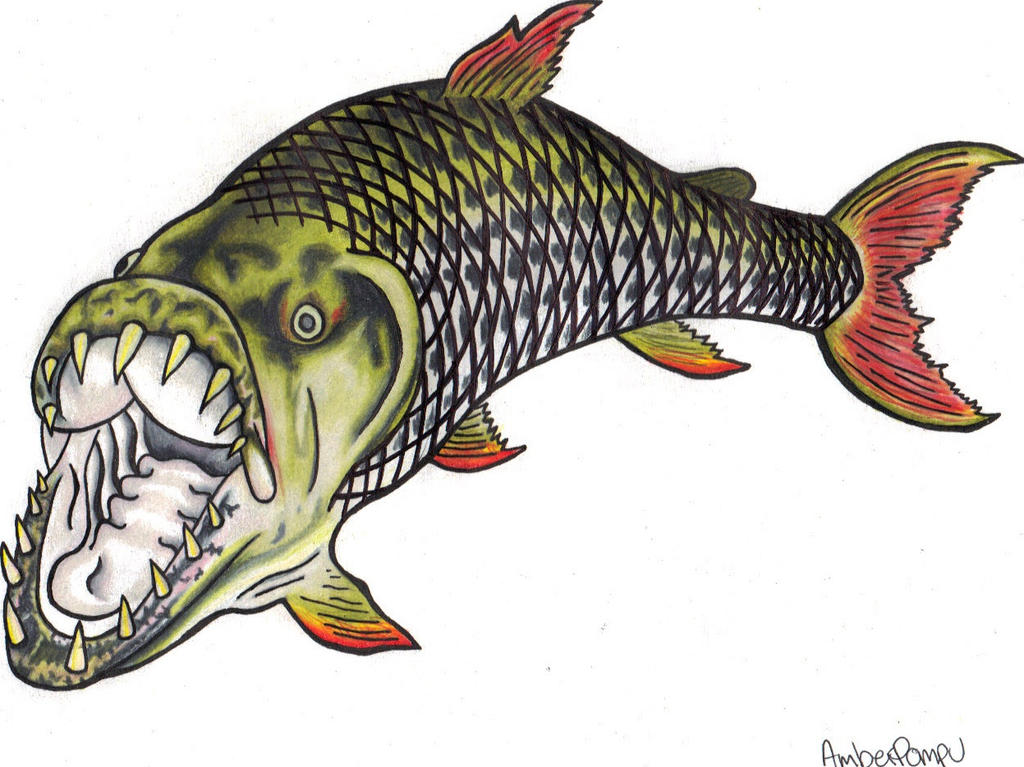 Goliath tigerfish by missfebruary on deviantart for Tiger fish pictures