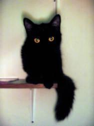 Black Cat by Nojike