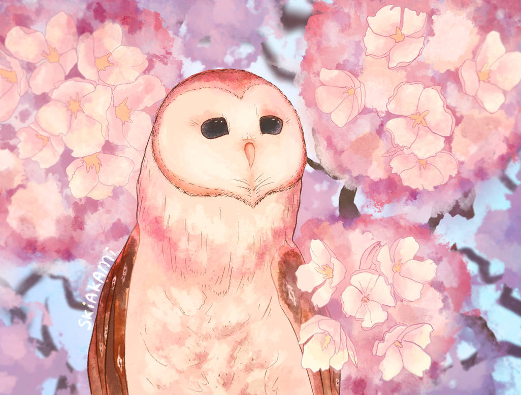 owl and pink