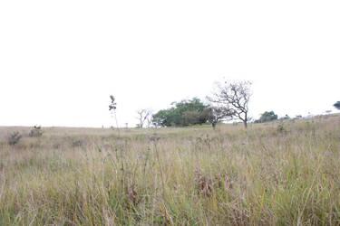 Kranzkloof South Africa grasslands