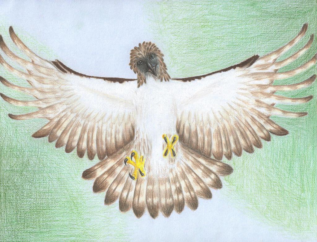 Philippine Eagle Wallpaper