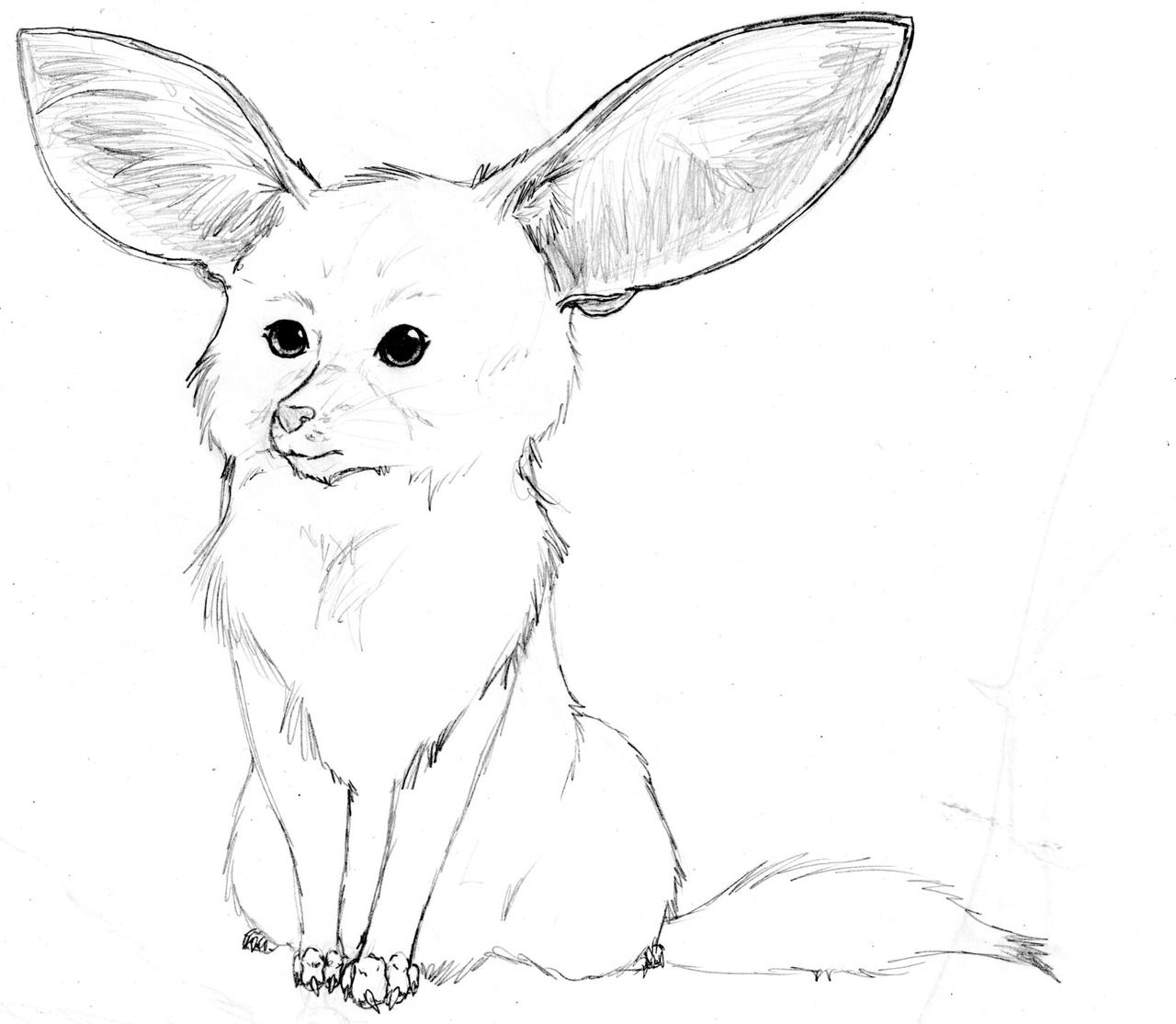 Fennec Fox doodle by nightwindwolf95