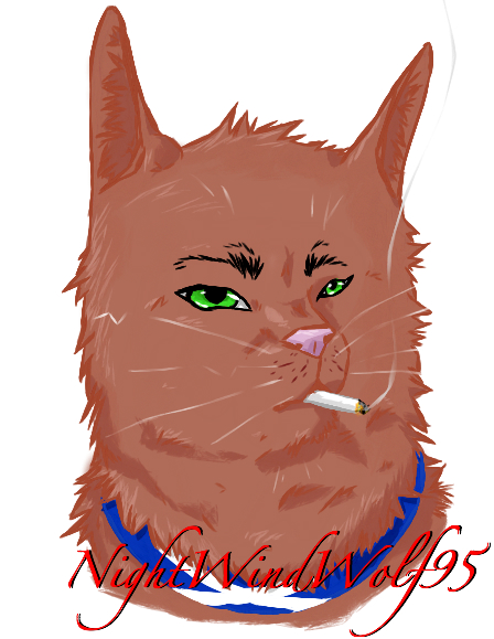 Colored Cat Scottland by nightwindwolf95