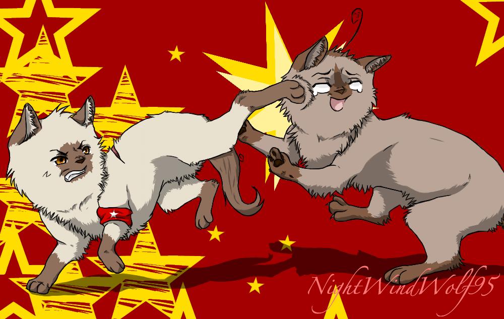 Hetalia Cats: Kung-POW by nightwindwolf95