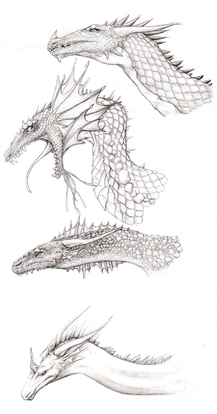 More Dragon sketches by nightwindwolf95