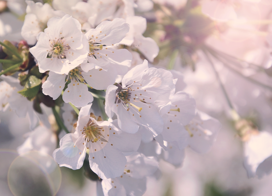 Blossom by hotarox-x