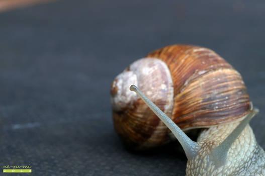 Snail 008