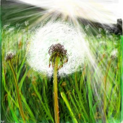 Dandelion by Missrlola