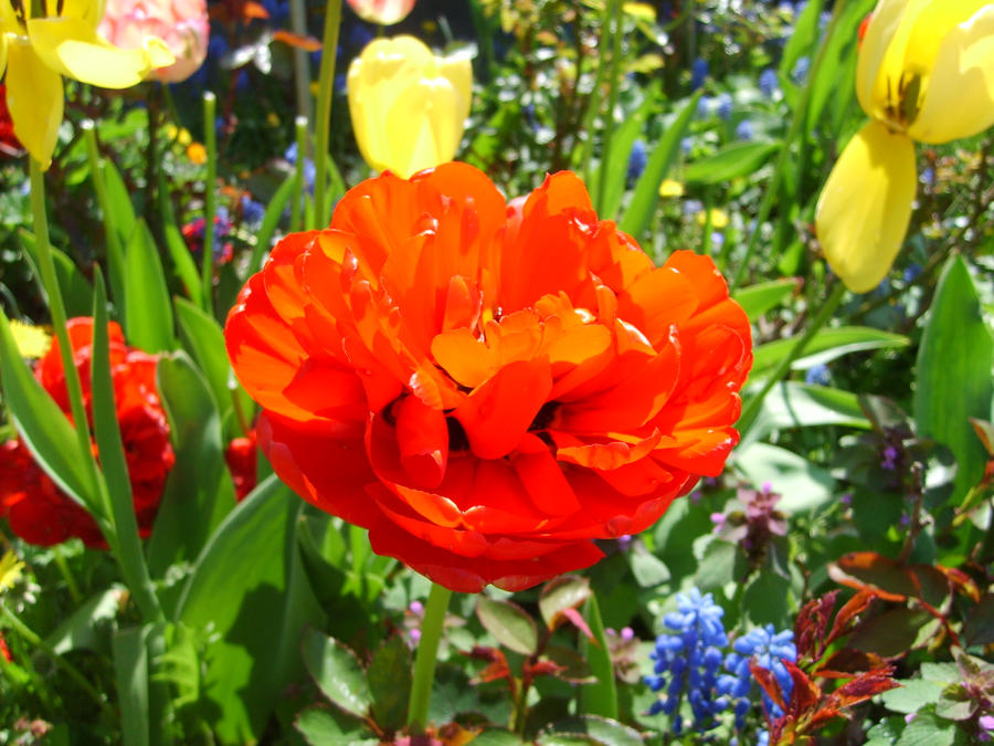 Flower by TeodoCake