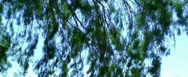 NIET Leaves Dance by FullFORCESoldier
