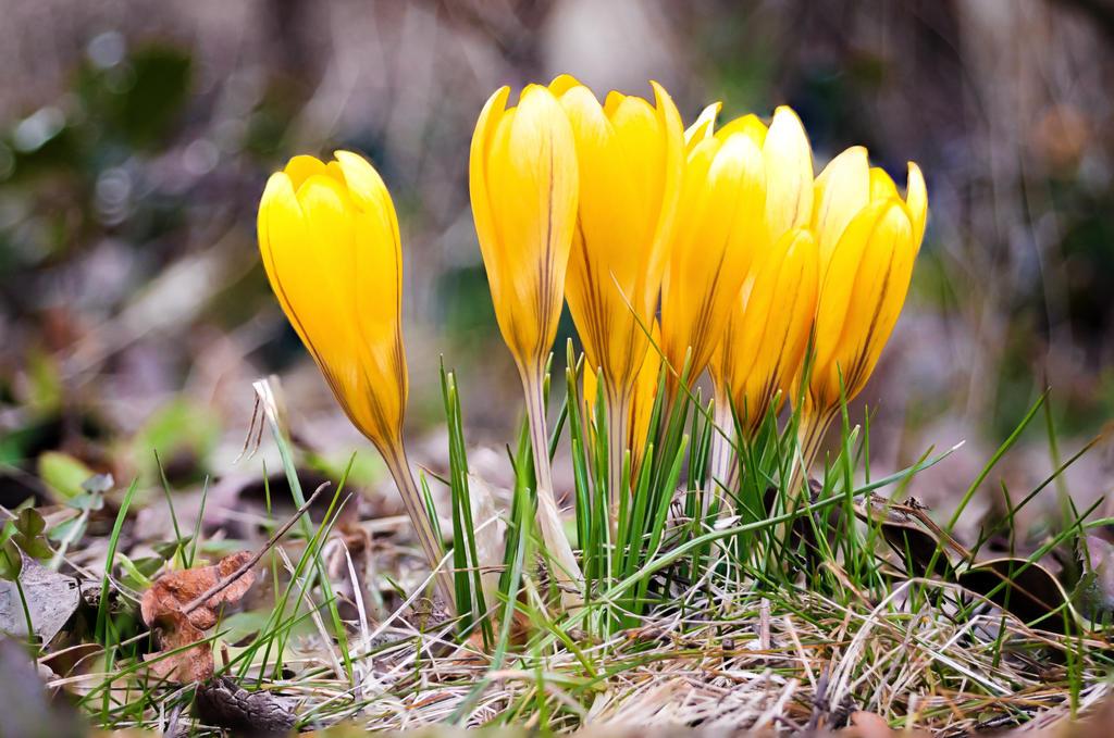 First spring flowers by horitsu on deviantart first spring flowers by horitsu mightylinksfo