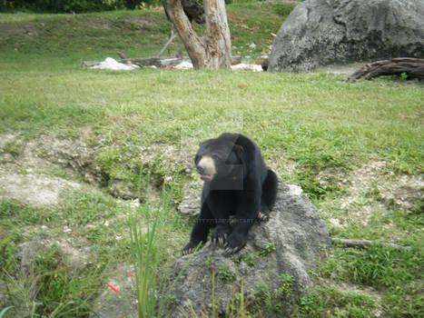 Sun Bear is Sad
