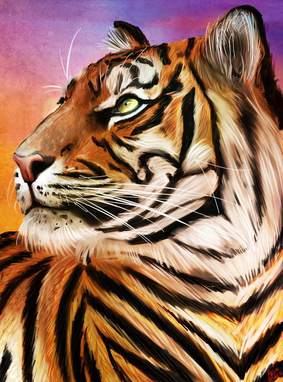 Tiger by Hyorina