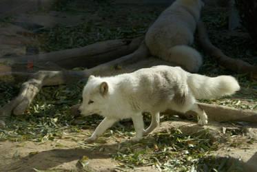 Arctic Fox by xSoCassiex