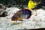 Rainbow Fish Stock