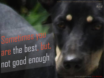 Sometimes you are the best... MV00031