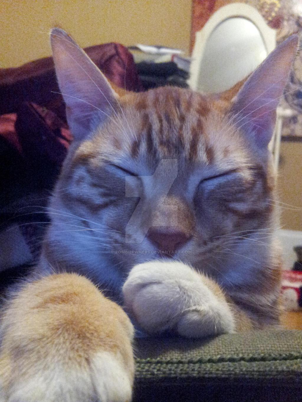My Kitten: Milo by ZombiePwner5