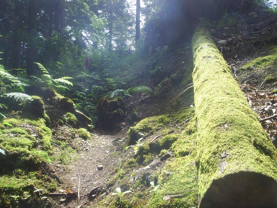 LogStock by zanastockz