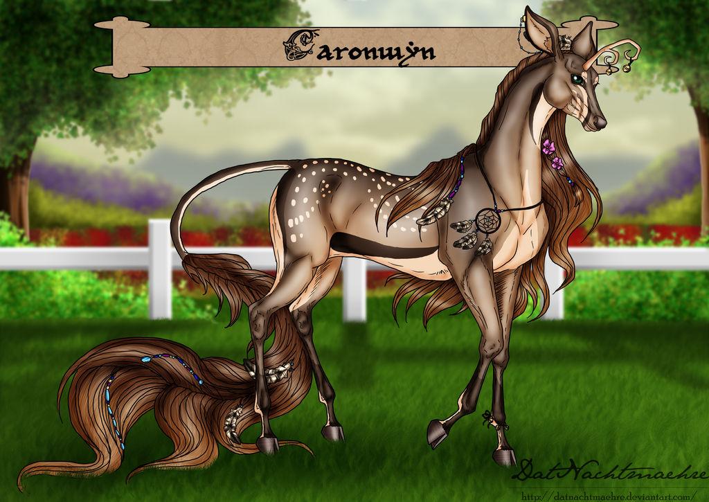 HSLG Caronwyn - Novice Champion
