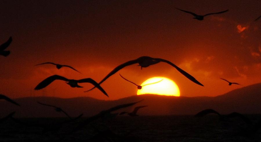 to the sunset by tolgagonulluleroglu