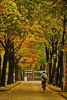 autumn in vienna 1