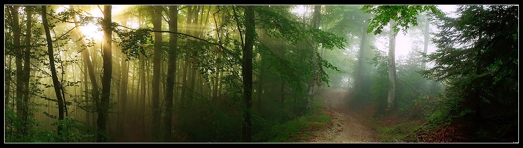 FIL ROUGE : Panoramas - Page 2 Barriandes__Mystic_Forest_by_LG77
