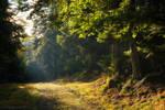 Peaceful Woods