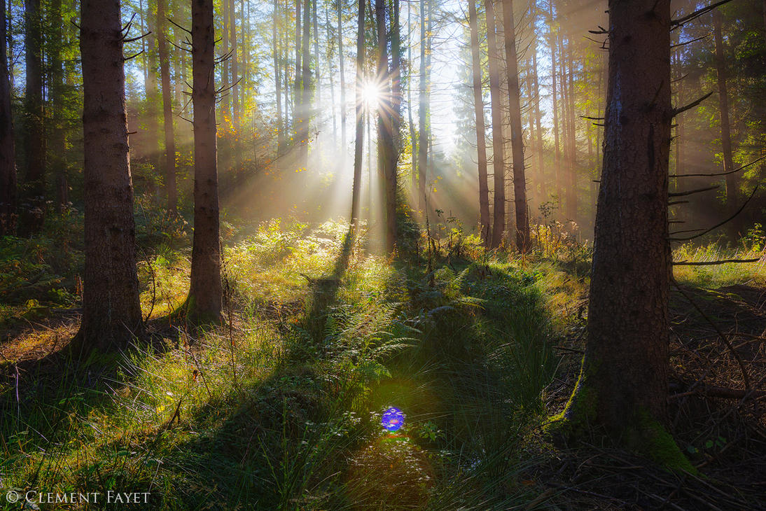 Sun in the Forest by LG77