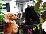 Charlie and Shadow by matiemouse