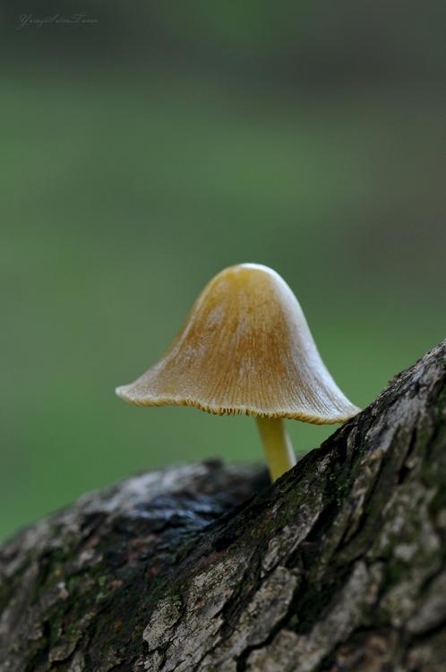 Mushroom by yavuzselimturan