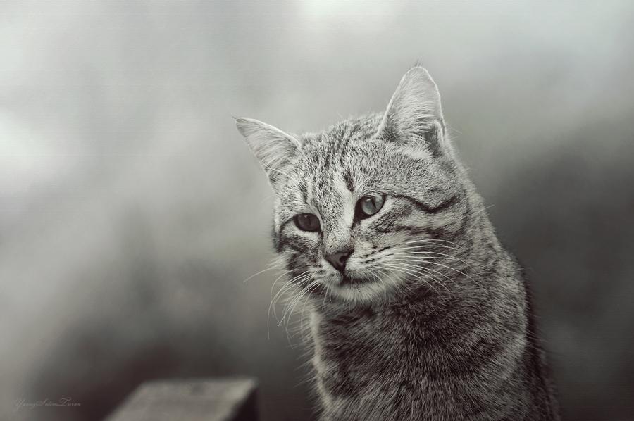Cat by yavuzselimturan
