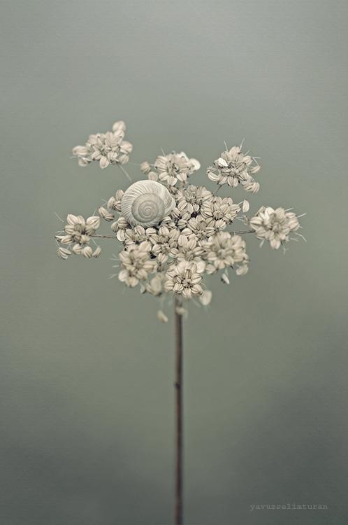 Flower by yavuzselimturan