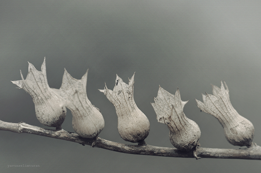 Seed by yavuzselimturan
