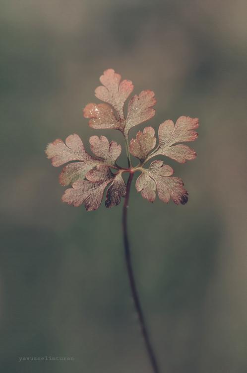 Leaf by yavuzselimturan
