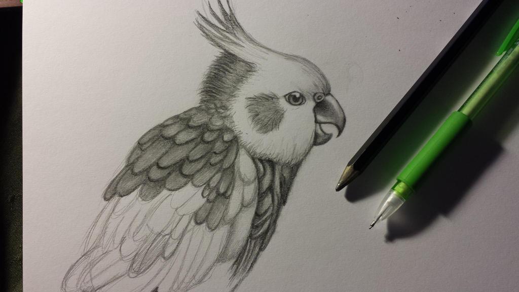 Cockatiel work in progress by Animallol