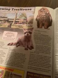 Raccoon in the newspaper by cartoonstar92