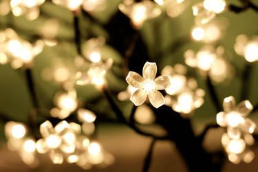 Flower Lights by elfofrohan