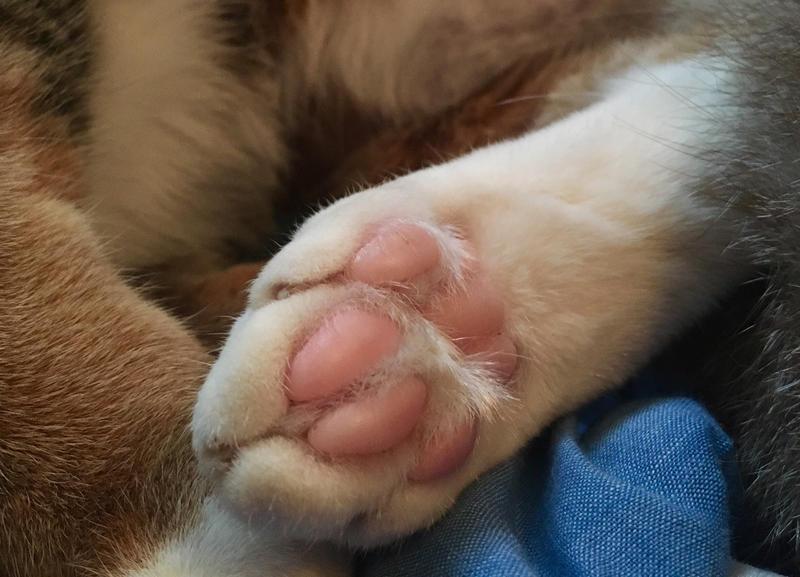 .:Toe Beans:. by Karasu-no-Yami