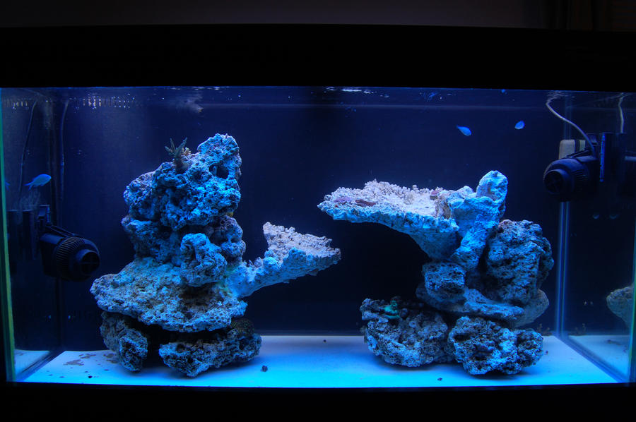 Do You Have Nice Aquascaping If So Let S See It Page