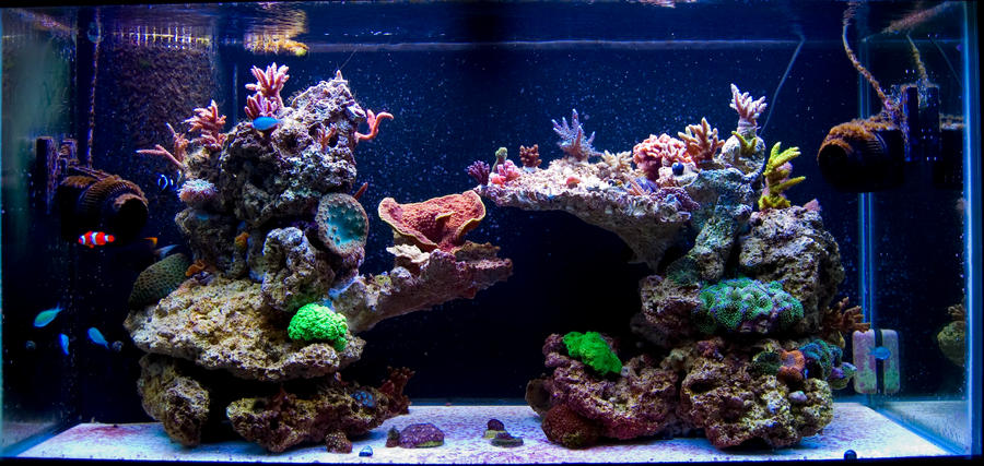 Pictures Of Just Your Liverock Aquascaping...for A SPS Tank   Reef Central  Online Community