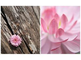 spring 01 by defania