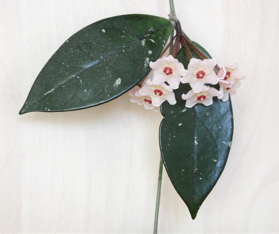 Flowering hoja by Adagem