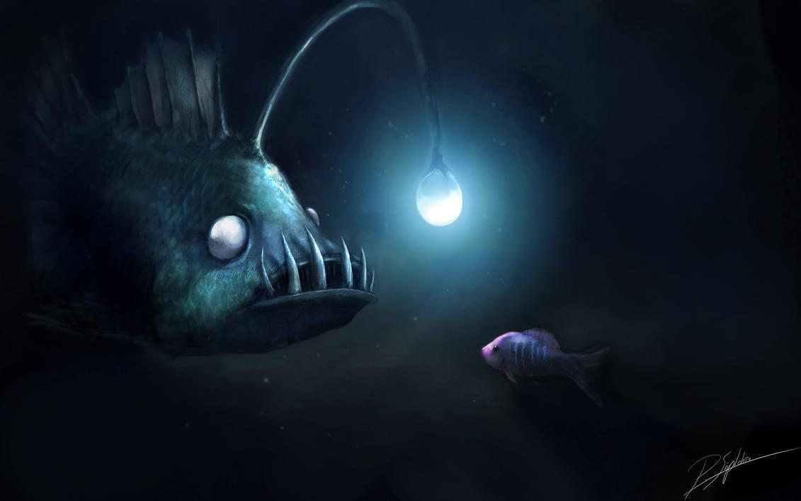 34   Cool Lamp Fish for lamp fish nemo  155fiz