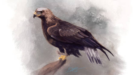 Golden Eagle by psiipilehto