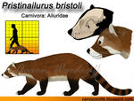 Pristinailurus bristoli model (redux)