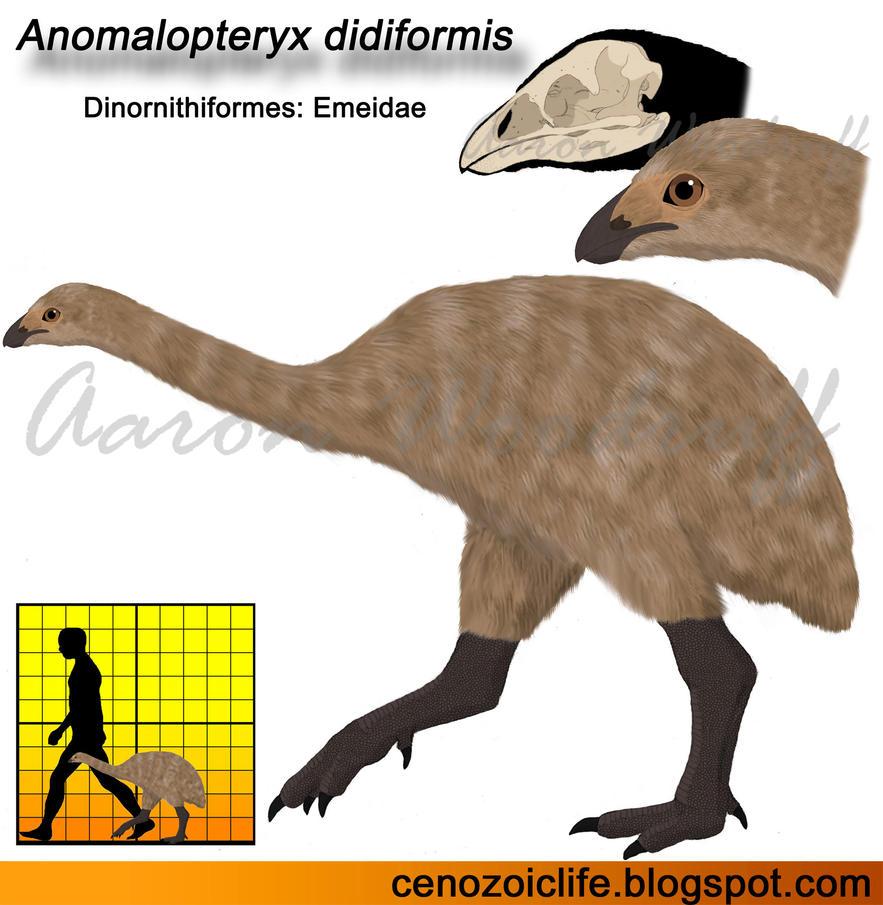 Anomalopteryx didiformis by CenozoicKing